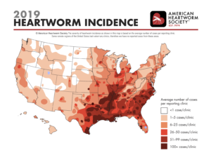 Canine heartworm disease